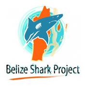 Belize-Shark-Project
